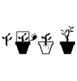 scheme rooting cuttings vector image vector image