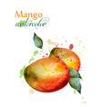 mango fruit watercolor delicious colorful vector image vector image