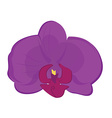 Purple orchid flower vector image
