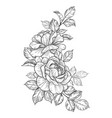 hand drawn floral bunch with roses and leaves vector image