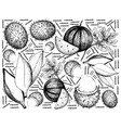 hand drawn of fresh fruit on white background vector image vector image