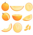 melon icons set cartoon style vector image vector image