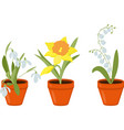 spring flowers growing in the pods vector image vector image
