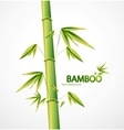 bamboo stem abstract nature background vector image