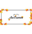 hello autumn falling maple leaves background vector image vector image