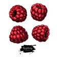 raspberry drawing isolated berry sketch on vector image vector image