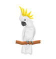 white cockatoo parrot on branch exotic bird with vector image vector image
