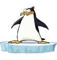 penguin on the ice floe vector image