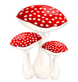 Red poison mushrooms vector image