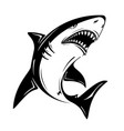 angry black shark isolated on white background vector image vector image