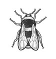 bumblebee bee insect sketch vector image vector image