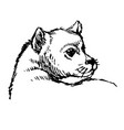 little dog hand drawn vector image