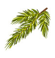 lush green spruce twig vector image vector image