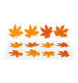 set of maple leaves vector image vector image