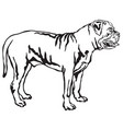 decorative standing portrait of boerboel vector image vector image