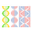 dna different sets of spirals vector image