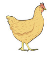 farm animal bird chicken on white background vector image vector image