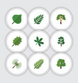Flat icon nature set of decoration tree leaves vector image