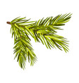 green spruce twig from left to right side vector image vector image