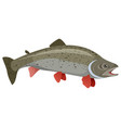realistic trout on white background vector image