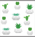 succulents seamless pattern white vector image vector image