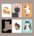 cute cats card backgrounds vector image