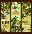 olive oil extra virgin sketch banners vector image vector image