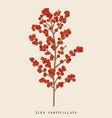 winterberry branch ilex vertical vector image