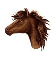 Brown arabian horse animal head vector image
