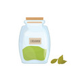 cardamon seeds stored in glass jar isolated on vector image vector image