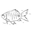 fish drawing on white background vector image vector image