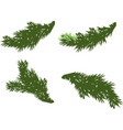 green spruce branches elements on white background vector image vector image