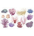 hand drawn collection corals vector image vector image