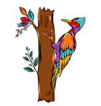 woodpecker with colorful bird feathers vector image