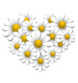 Camomiles in the shape of heart vector image vector image