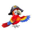 cartoon pirate parrot vector image vector image