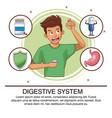 digestive system infographic vector image