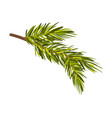 green realistic drawn spruce twig vector image vector image