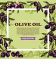 olive fruit sketch frame of extra virgin oil label vector image vector image