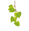 branch of a birch with leaves vector image