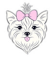head of hand drawn yorkshire terrier vector image