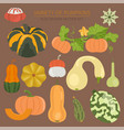 variety of pumpkins flat design set vector image vector image