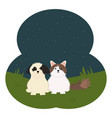 cute little cat and dog in field vector image