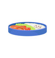 japanese food in blue lunch box bento concept vector image vector image