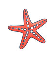 red starfish with suckers isolated vector image vector image