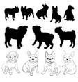 bulldog silhouette dog vector image