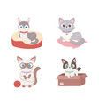 cats with box and lying in cushion vector image vector image