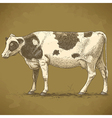 engraving cow retro vector image