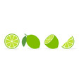 lime slice green lemon vector image vector image