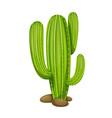 mexican cactus icon vector image